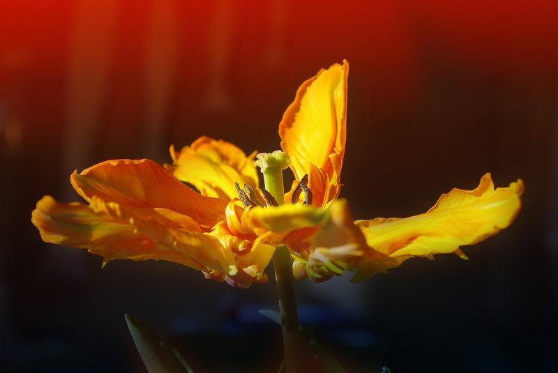 黄色影片种子_花厂花园黄色春天种子性质关闭宏芽图片免费下载_自然风景素材 ...